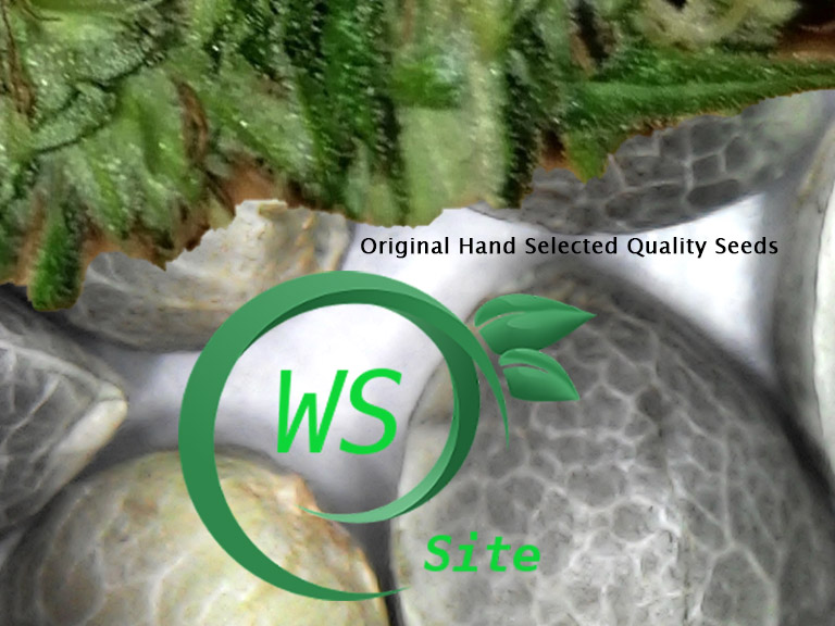 Wietzaden Original Hand Selected Seeds