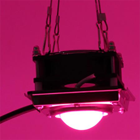 COB led groeilamp